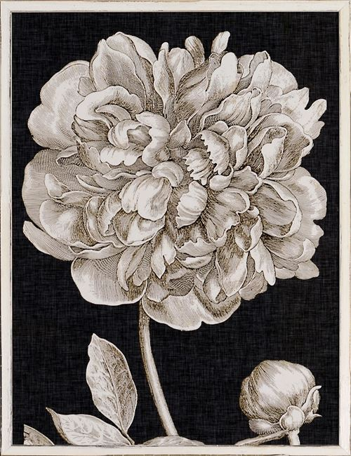 Picture of Dramatic Peony I