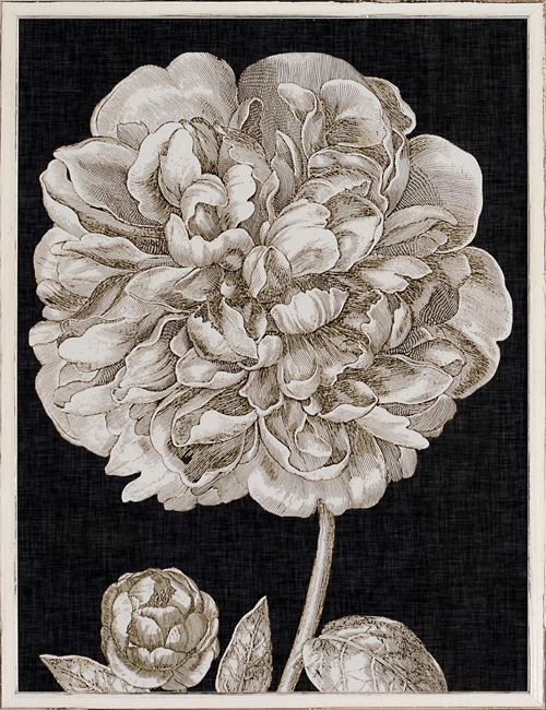 Picture of Dramatic Peony II