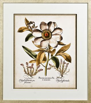 Picture of Ivory Peonies I