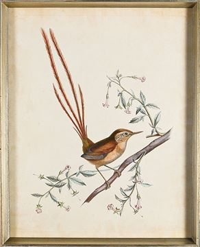 Picture of Delicate Birds I - Framed on Board