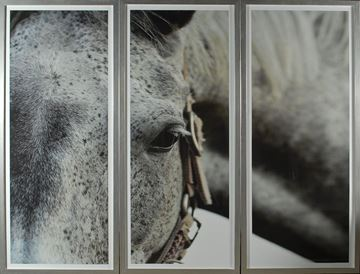 Picture of Dappled Grey - Triptych