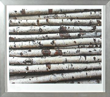 Picture of Birch Abstract II
