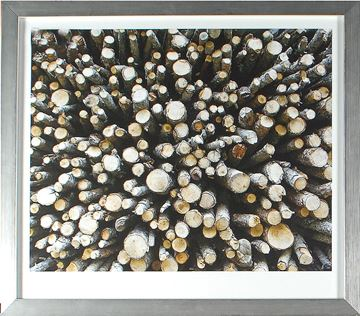 Picture of Birch Abstract IV
