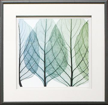 Picture of Celosia Leaves I