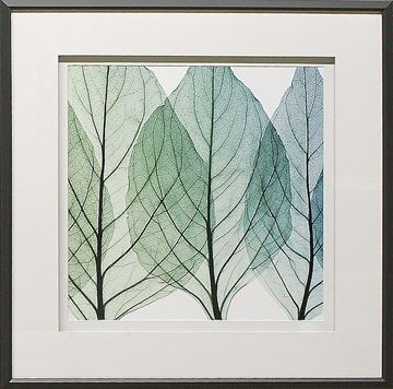 Picture of Celosia Leaves II