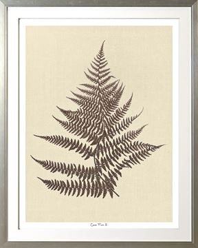 Picture of Cocoa Fern II Lge 30X38