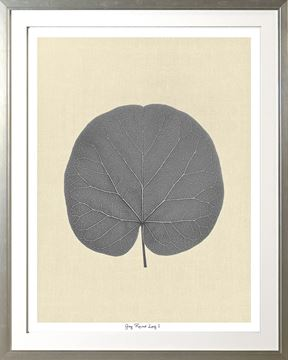 Picture of Grey Round Leaf I Lge