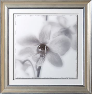 Picture of Sepia Focus, Floral I - A