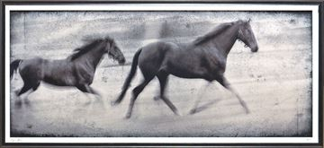 Picture of Equine Motion