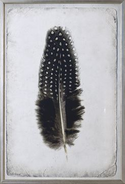 Picture of Feather Study III