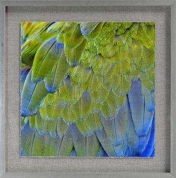 Picture of Tropical Plumage I