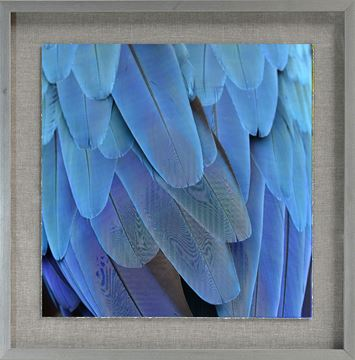 Picture of Tropical Plumage II