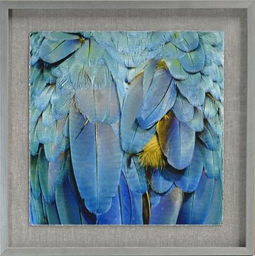 Picture of Tropical Plumage IV