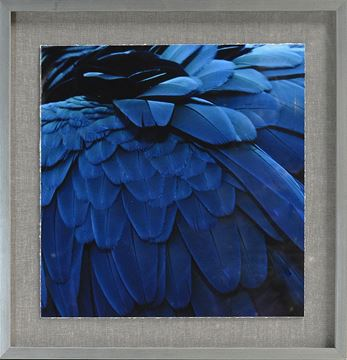 Picture of Tropical Plumage V