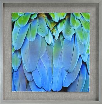 Picture of Tropical Plumage VI