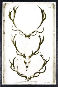 Picture of Antler Plate II