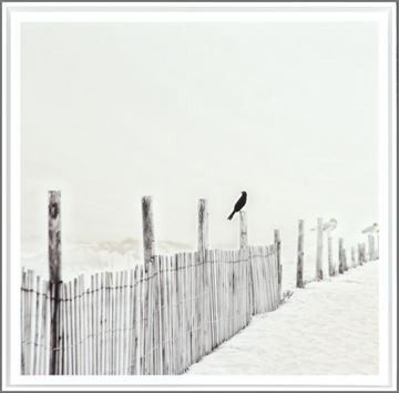 Picture of Blackbird On Fence