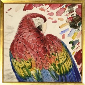 Picture of Lear - Red & Yellow Macaw - Sml