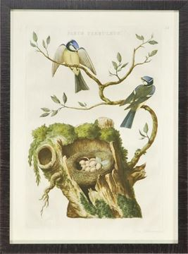 Picture of Nozeman Birds & Nests III