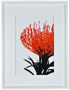 Picture of Orange Protea I