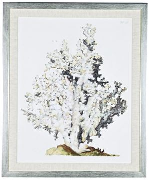 Picture of Antique Coral I