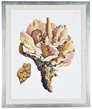 Picture of Antique Coral III