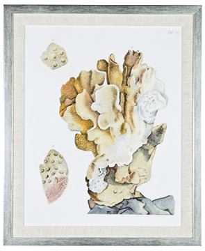Picture of Antique Coral IV