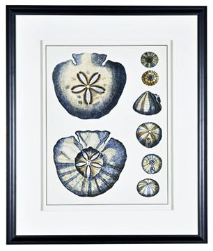 Picture of Antique Blue Sand Dollar