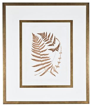 Picture of Sepia Ferns V