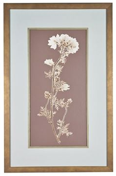 Picture of Taupe Nature Study I
