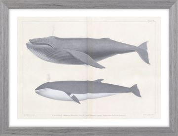 Picture of Vintage Whale Series III