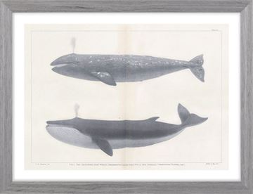 Picture of Vintage Whale Series IV