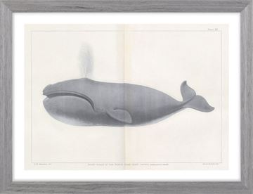 Picture of Vintage Whale Series V