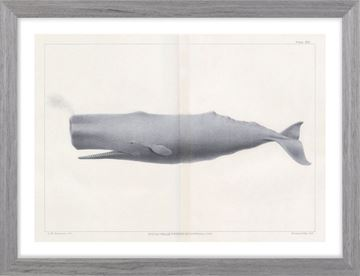 Picture of Vintage Whale Series VI
