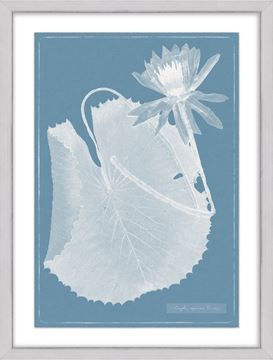Picture of Cyanotype Water Lilies IX