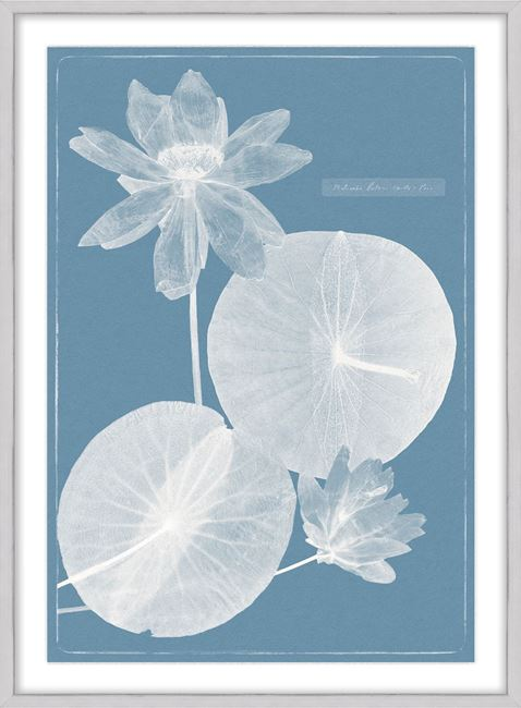 Picture of Cyanotype Water Lilies VI - Large