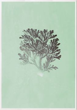 Picture of Silver Foil Coral IV On Seafoam Wash