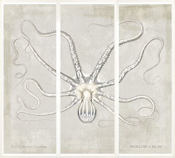 Picture of Mollusca Pl 54 Triptych
