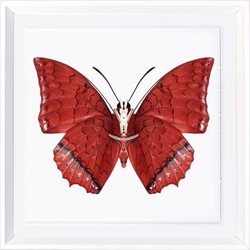 Picture of Vivid Papillons I