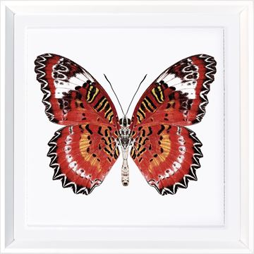 Picture of Vivid Papillons IV