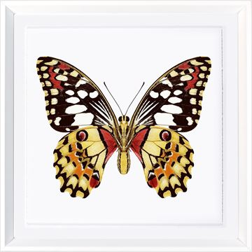 Picture of Vivid Papillons V