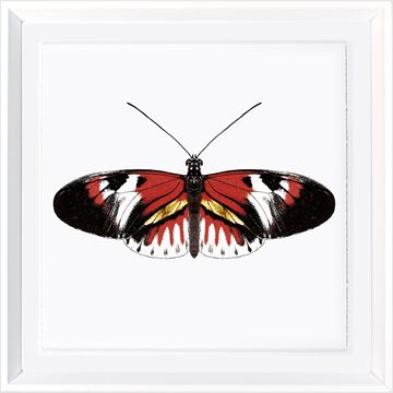 Picture of Vivid Papillons VII
