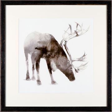 Picture of Caribou