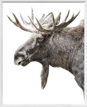 Picture of Mod. Farm - Algonquin Moose - Mini - White
