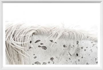 Picture of Mod. Farm - Appaloosa - Mini - White
