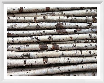 Picture of Mod. Farm - Birch Abstract II - Mini - White
