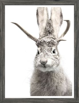 Picture of Mod. Farm - Jackalope - Mini - Grey