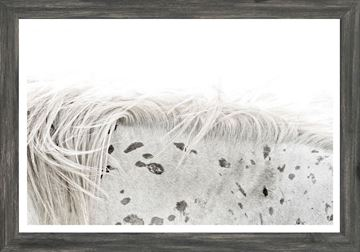 Picture of Mod. Farm - Appaloosa - Mini - Grey