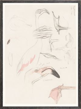 Picture of Collection 17 - Flamingo Study
