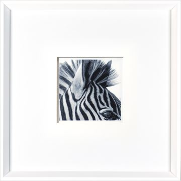 Picture of Zebra Detail  - White